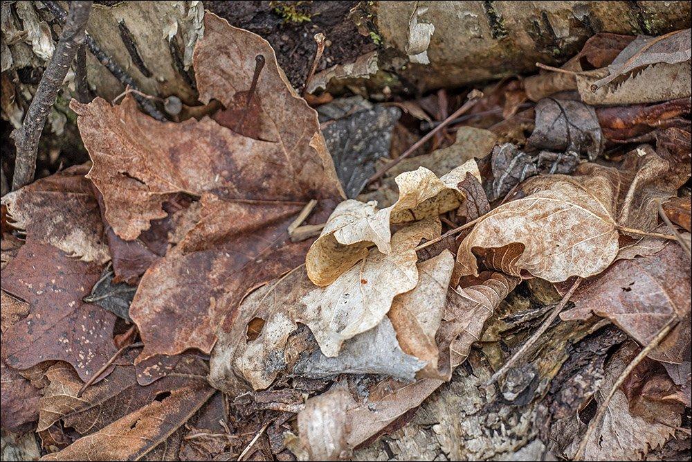 The Old Birch Log