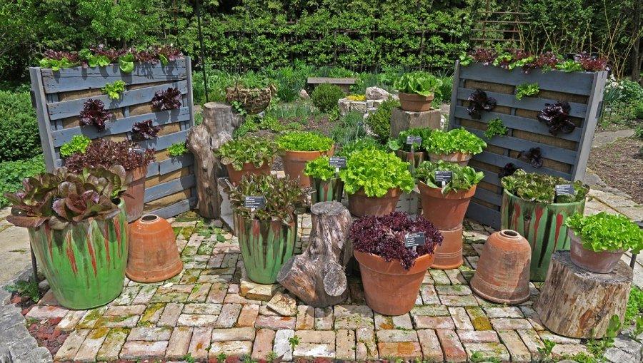 Olbrich Botanical Gardens - Lettuce Varieties