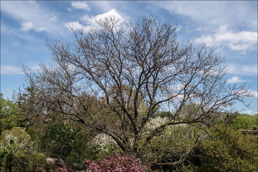 Olbrich Botanical Gardens - Tree and Sky