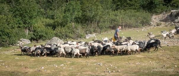 Le troupeau de l'Onda