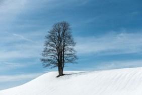 Un arbre comme des racines qui raccrochent le ciel et la terre