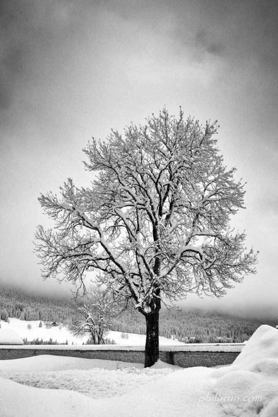 Arbre et neige en noir et blanc