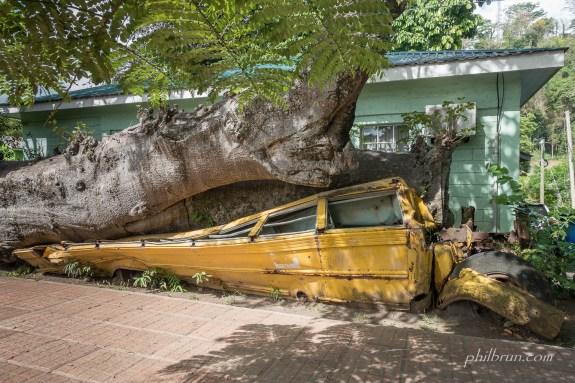Bus écrasé par un baobab à Roseau île Dominique
