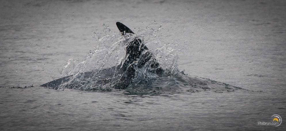 Un dauphin nous accueille dès le début du parcours