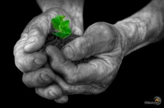Les mains vertes