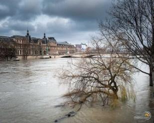 Les arbres ne manque pas d'eau !
