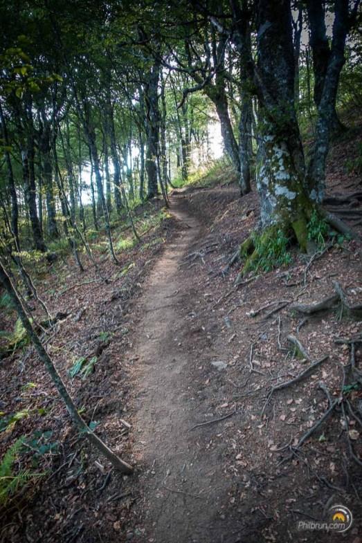 Le très joli sentier serpente dans la forêt où on entend les animaux se mouvoir...