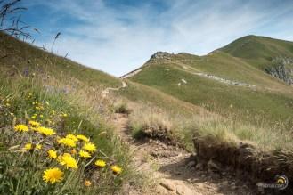 Le sentier remonte vers le Puy de Cacadogne
