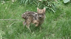 Tiny Deer