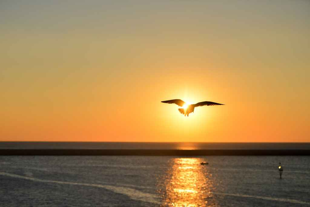 A bird flying in the sunset