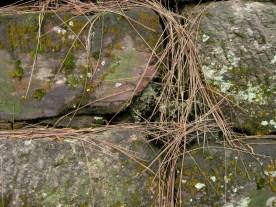 Rocks / Straw