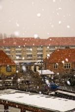 SnowSpring-1