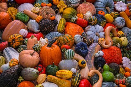 autumn-harvest-gary-gay