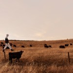 philip kanwischer photography fine art photoshop magical realism cow walking the line