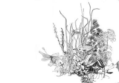 Aquarium,pen and ink fish 2009