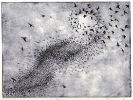 Philippa Jones, Flock, etching, 2011