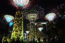 Les arbres de metal de Singapour