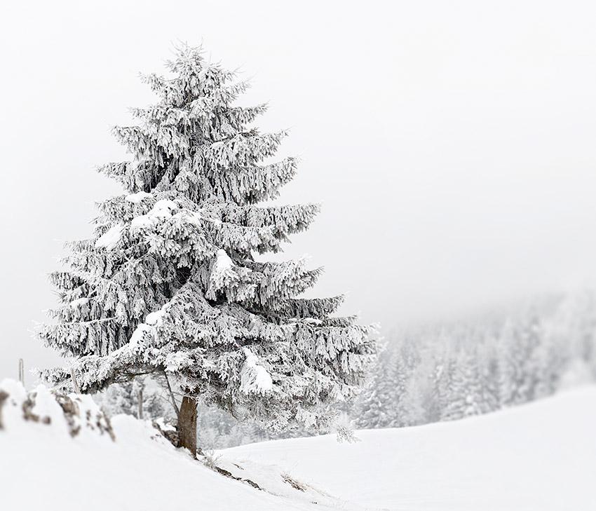 valle de joux 2013 hiver