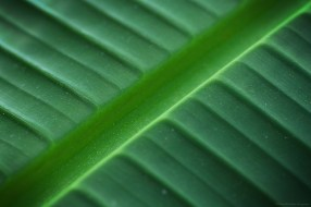 La tranchée verte