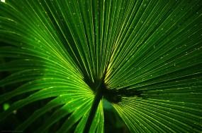 Palmier solaire