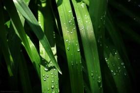 Les joyaux d'après-pluie