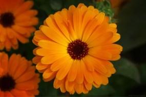 Pur orange