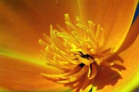 Fleur dorée