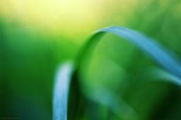 Les frères turquoises (magie du Carex n°15)