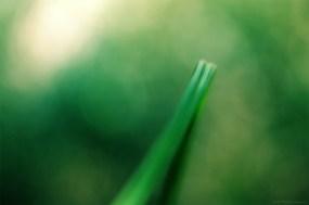 La solitude (magie du Carex n°17)