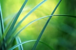De lignes et de courbes (magie du Carex n°18)