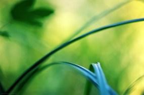 Le croisement des arches (magie du Carex n°22)