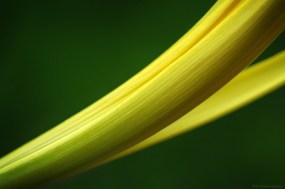 La courbe jaune