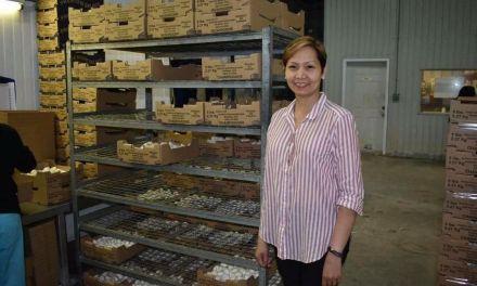 Mushroom pickers win legal battle against recruiter