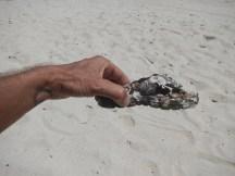 Slipper covered in seashells