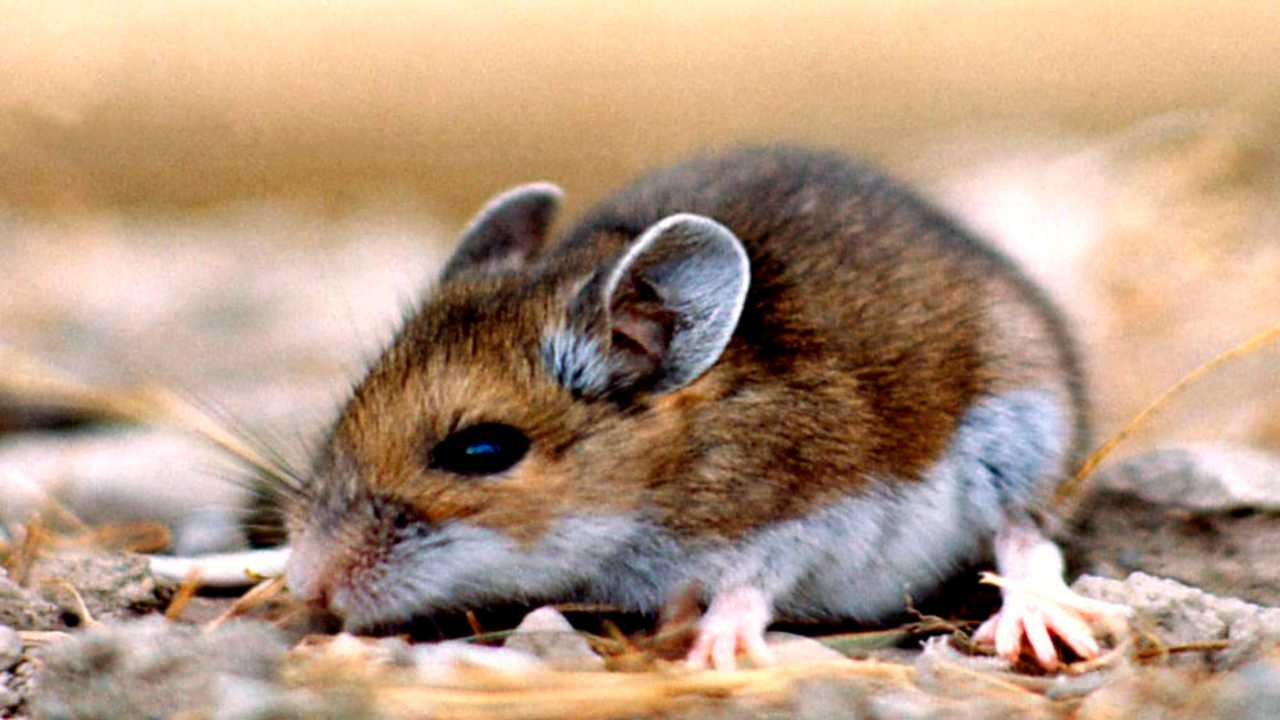 What is Hantavirus? Facts you need to know about the new virus in ...