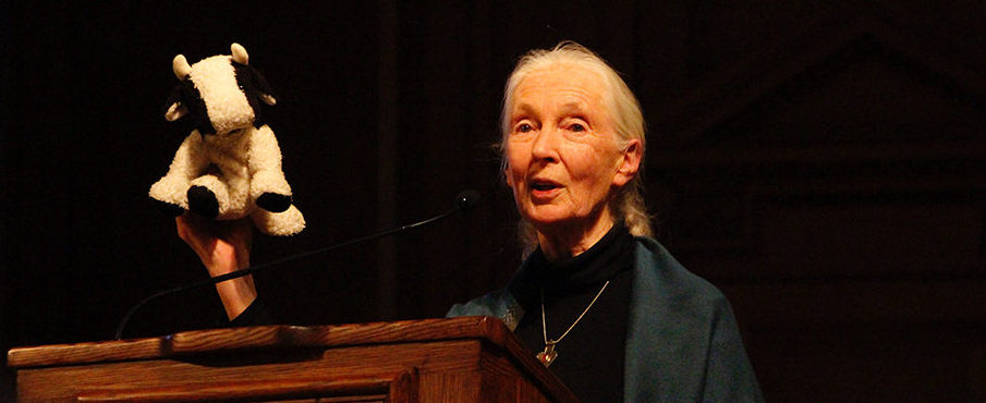 Exclusive: Dr. Jane Goodall Sits Down With The Phillipian