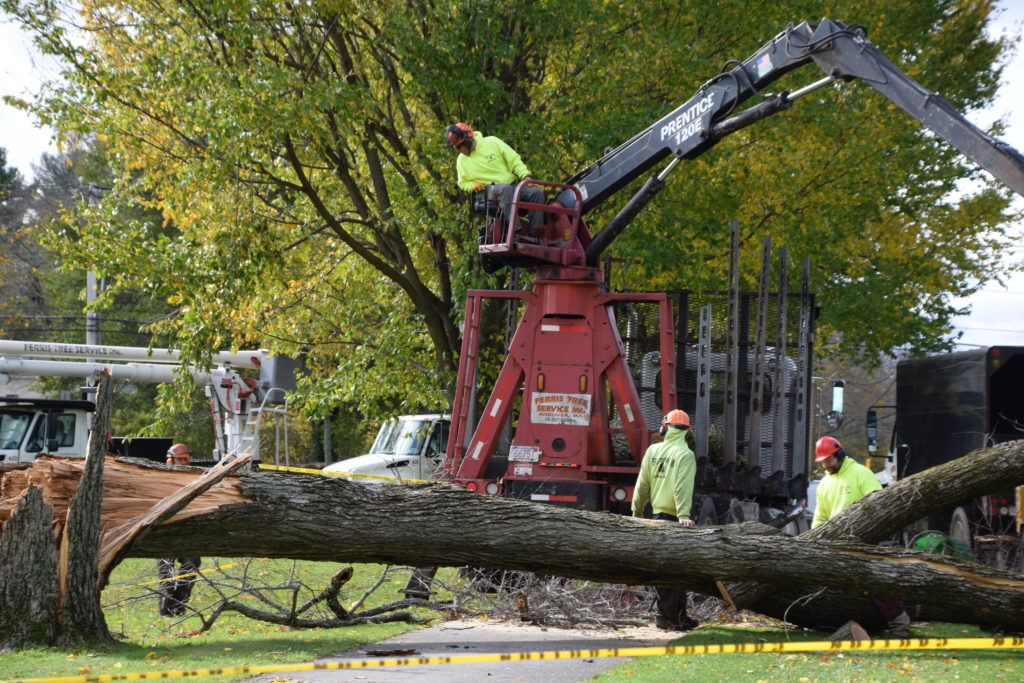 A large Elm on the Andover vista was struck by lightening during Sunday's storm.