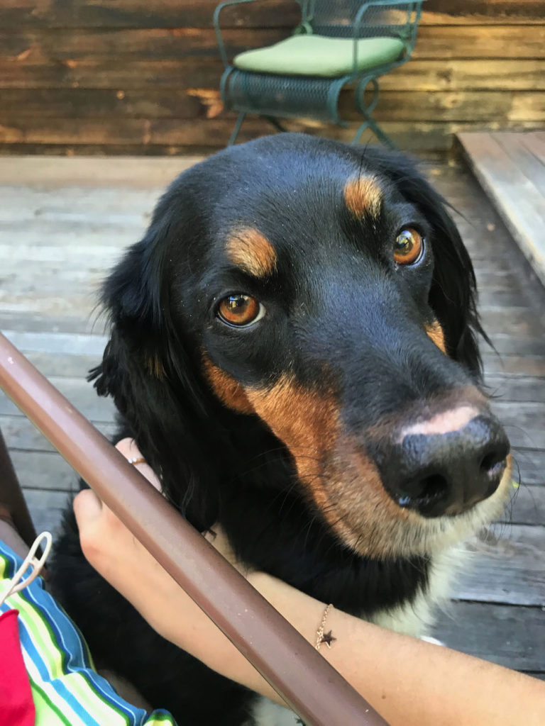 A family-friendly dog waits patiently on the porch for a treat from Daisy Tuller '20.