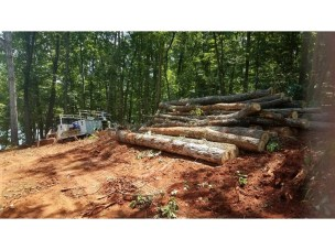 Trees that have been cleared and stripped down into logs.