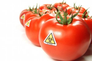 GMO tomatoes with sticker