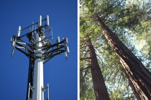 5G tower and large evergreeen trees