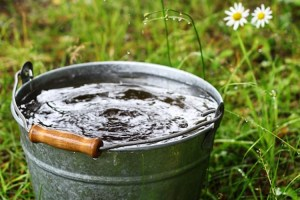 Rainwater collecting in a bucket