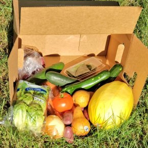 First Box of Imperfect Produce