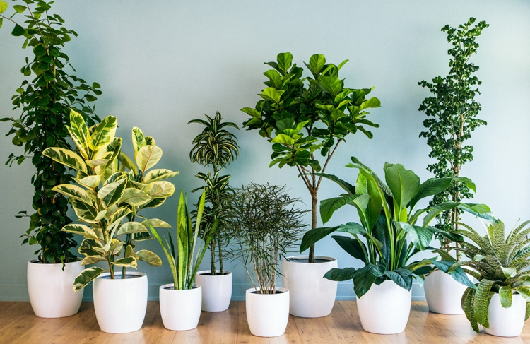 Purify Air At Homes Using These Best Houseplants