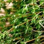 Powerful Herb