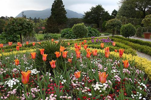 An Irish Garden, full of flowers. Beautiful.