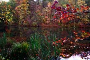 Fall-color-reeds-trees-lake_-_West_Virginia_-_ForestWander
