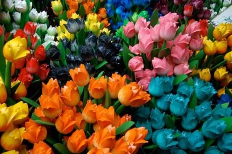 tulips-2849_640