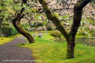 UBC11SPJG Cherry Blossom Path