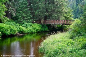 Ward Lake Recreation Area, Tongass National Forest, Ketchikan, Alaska.